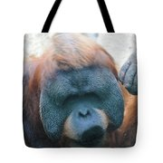 Orangutan Kiss Tote Bag
