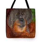 Orangutan Male Tote Bag