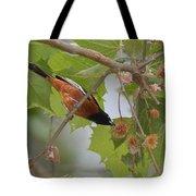 Orchard Oriole Tote Bag