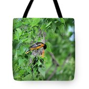Orchard Oriole Feeding The Kids Tote Bag