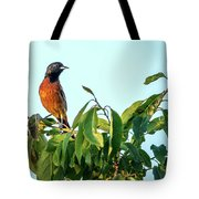 Orchard Oriole Songbird Perched On A Bush Tote Bag