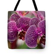 Orchid Ascda Laksi Tote Bag