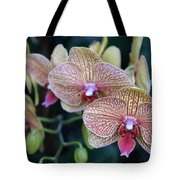 Orchid Beauty Tote Bag
