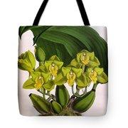 Orchid, Bifrenaria Aurantiaca, 1891 Tote Bag