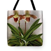 Orchid, C. Ashburtonioe Superbum, 1891 Tote Bag