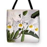 Orchid, C. Eldorado Virginalis, 1891 Tote Bag