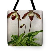 Orchid, C. Oenanthum Superbum, 1891 Tote Bag