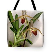 Orchid, Cypripedium Elliottianum, 1891 Tote Bag