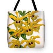 Orchid, Dendrobium Chrysotis, 1891 Tote Bag