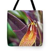 Orchid Flower - Restrepia Radulifera Tote Bag