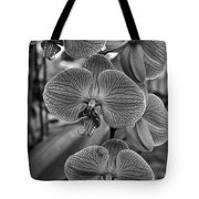 Orchid Glory Black And White Tote Bag
