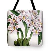 Orchid, O. Alexandrae Plumatum, 1891 Tote Bag