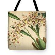 Orchid Odontoglossum Andersonianum Grenada  Tote Bag