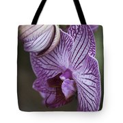 Orchid Strips Tote Bag