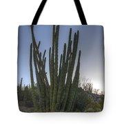 Organ Pipe Cactus At Sunset Tote Bag