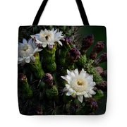 Organ Pipe Cactus Flowers  Tote Bag