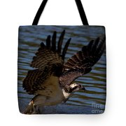Osprey Catching A Fish Tote Bag