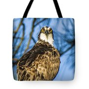 Osprey Head Turn Tote Bag