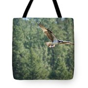 Osprey In Flight 6 Tote Bag