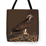 Osprey In Nest Tote Bag