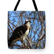 Osprey In Spring Tote Bag