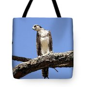Osprey In The Trees Tote Bag