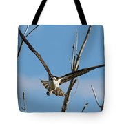 Osprey Launches Head On Tote Bag