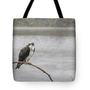 Osprey Looking Over The Rogue River Tote Bag