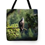 Osprey On Branch Tote Bag