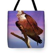 Osprey Solo Tote Bag