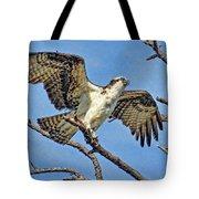 Osprey Wing Stretch Tote Bag