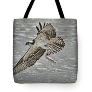 Osprey With Breakfast Tote Bag