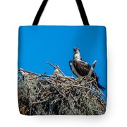 Osprey With Chicks Tote Bag