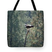 Osprey With Fish 2 Tote Bag