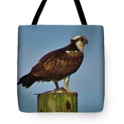 Osprey With His Catch Tote Bag