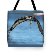 Osprey With Pin Fish Tote Bag