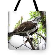 Osprey With Snack Tote Bag