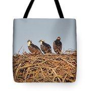 Osprey Young Tote Bag
