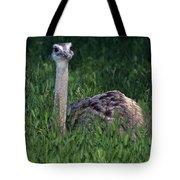 Ostrich Chick Tote Bag