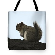 Our Squirrel Chubby Tote Bag
