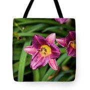 Purple Stella Doro Day Lily Tote Bag