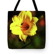 Out Of Darkness Into Light Tote Bag