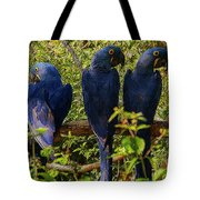 Out On A Limb 4 Tote Bag
