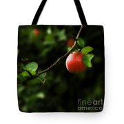 Out On A Limb  A Tempting Photograph Of A Tasty Ripe Red Apple On A Tree  Tote Bag
