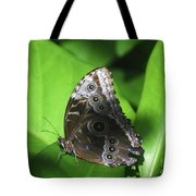 Owl Butterfly On A Cluster Of Green Leaves Tote Bag