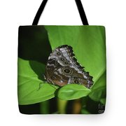 Owl Butterfly With Fantastic Distinctive Eyespots  Tote Bag