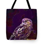 Owl Little Owl Bird Animal  Tote Bag