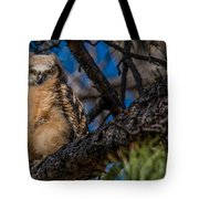 Owlet In A Fir Tree Tote Bag