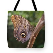 Owls Don't Always Have Feathers Tote Bag