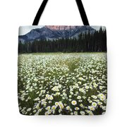 Ox-eyed Daisies And Cascade Mountain Tote Bag